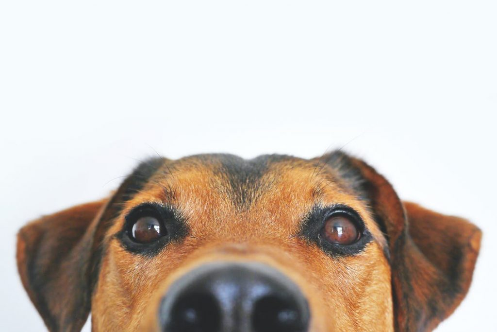 Best Tips To Remove Pet Odour
